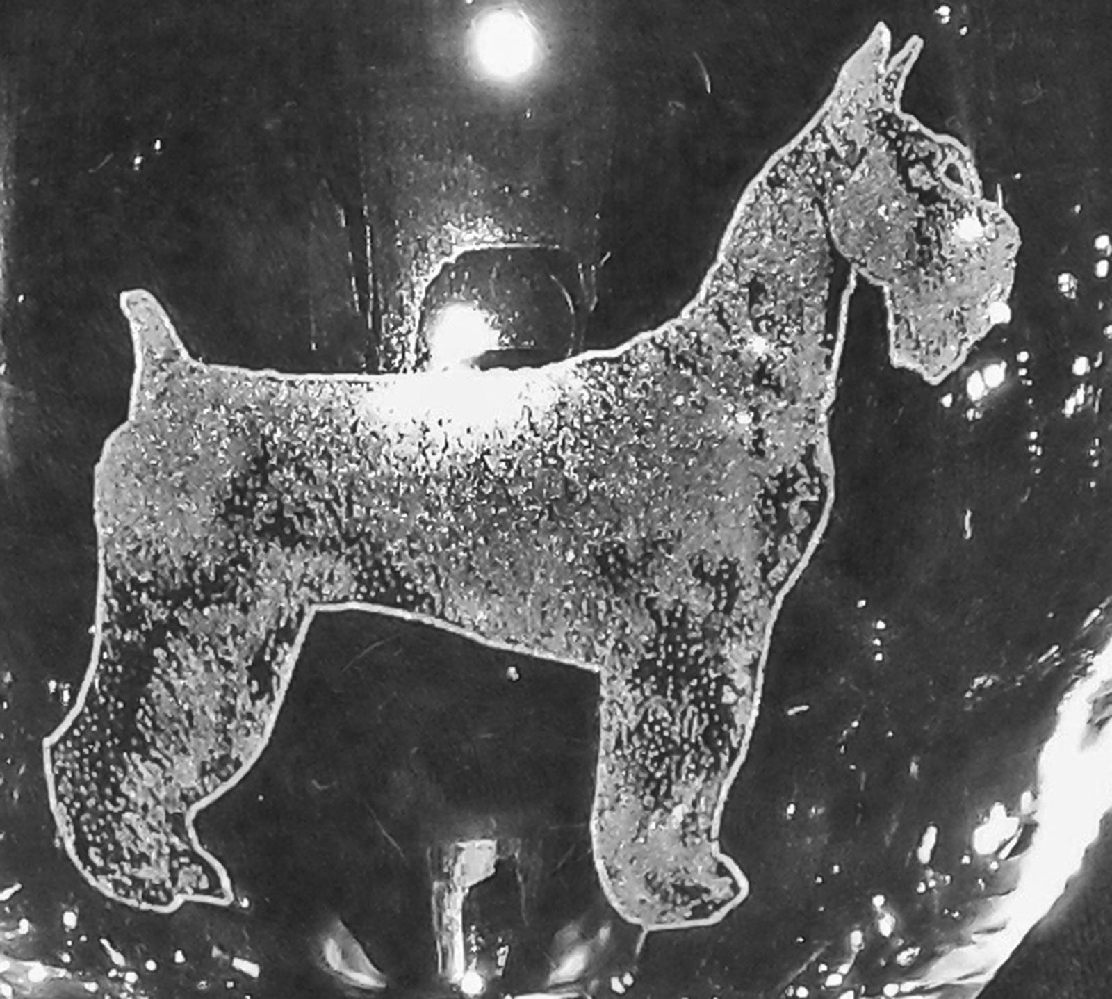 Giant Schnauzer Dog Muddy Creek Reflections